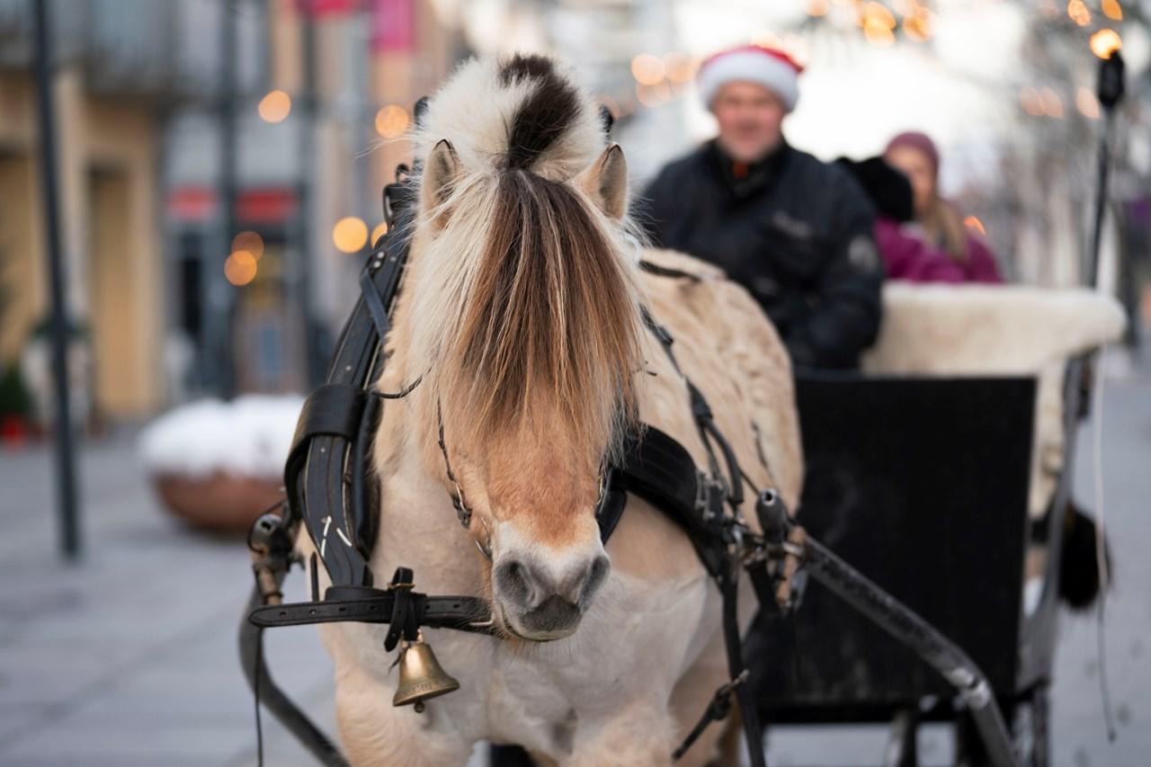 Kom og bli med på gratis tur med hest og kjerre i helgen!