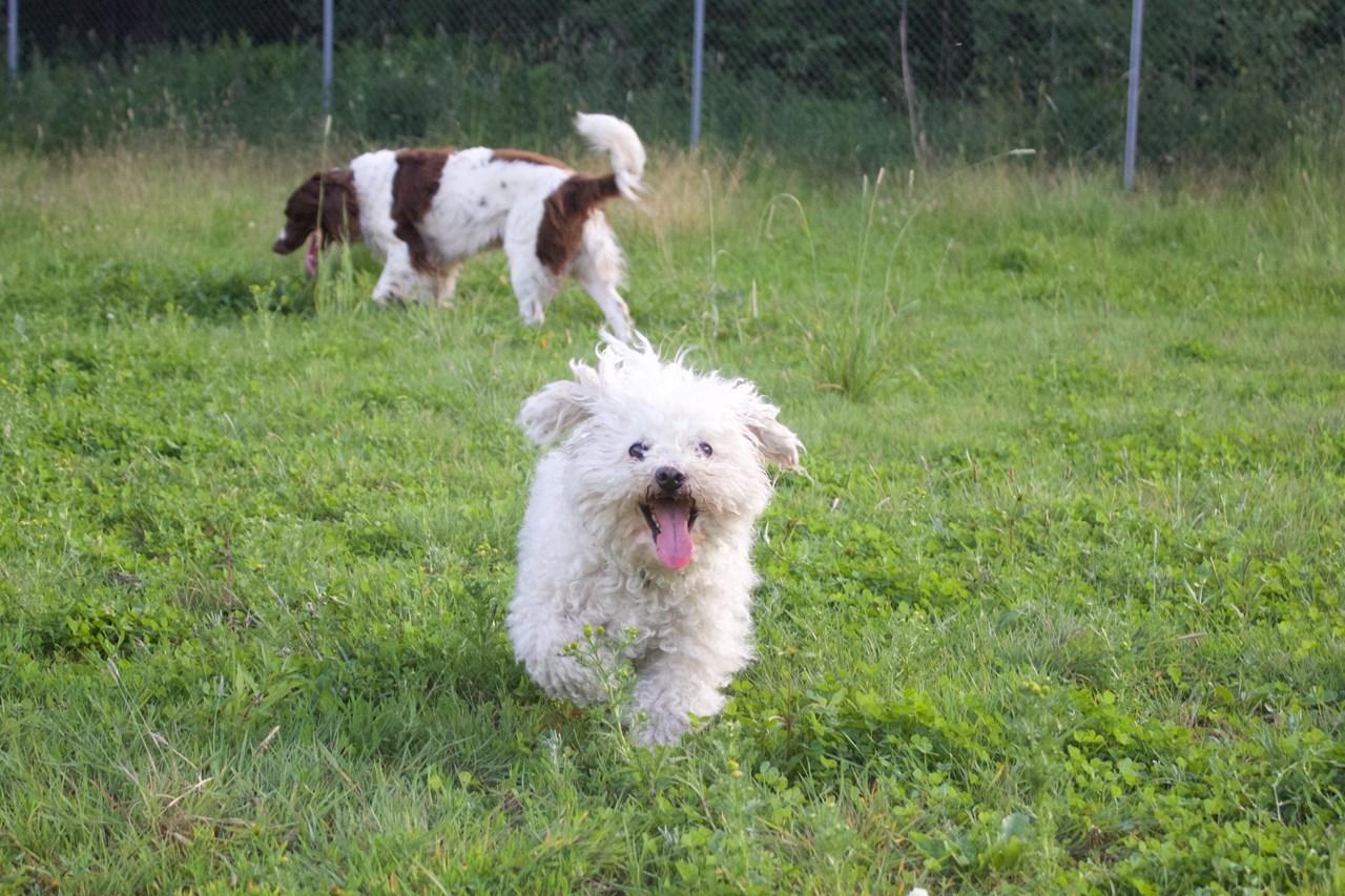 Hadde vi forstått hundespråk, hadde vi garantert fått høre at Elling (t.v.) og Happy storkoser seg på hundejordet i Lillestrøm. Foto: Thea Kristine Rønsen