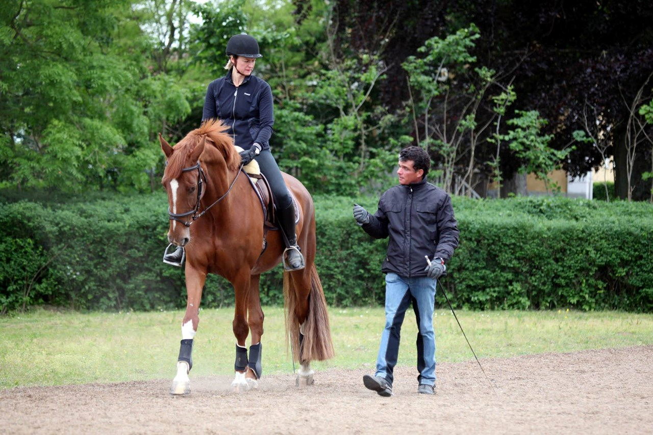 Classical dressage clinic with a focus on in-hand work