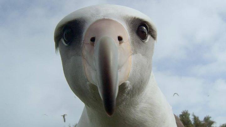 Gratis filmvisning - Albatross